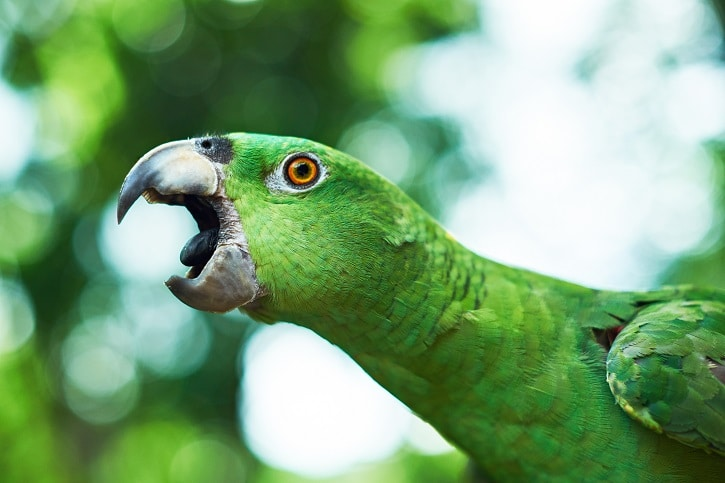 Find the most affordable talking parrot bird