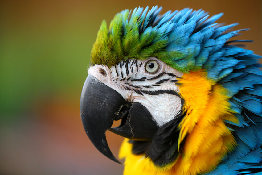 how much does a talking parrot cost
